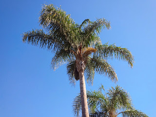 Palm tree against a clear blue sky