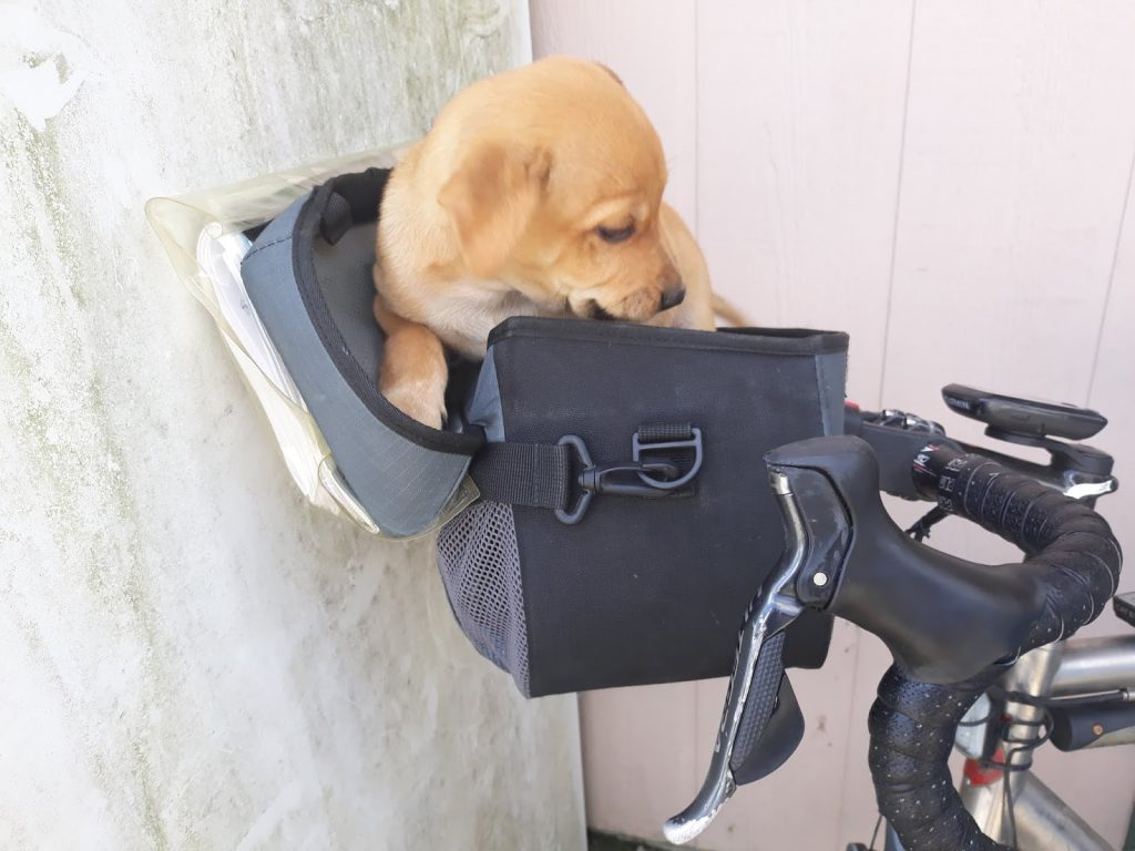 puppy in bike basket